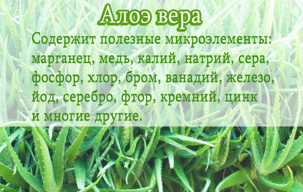 АЛОЭ ВЕРА