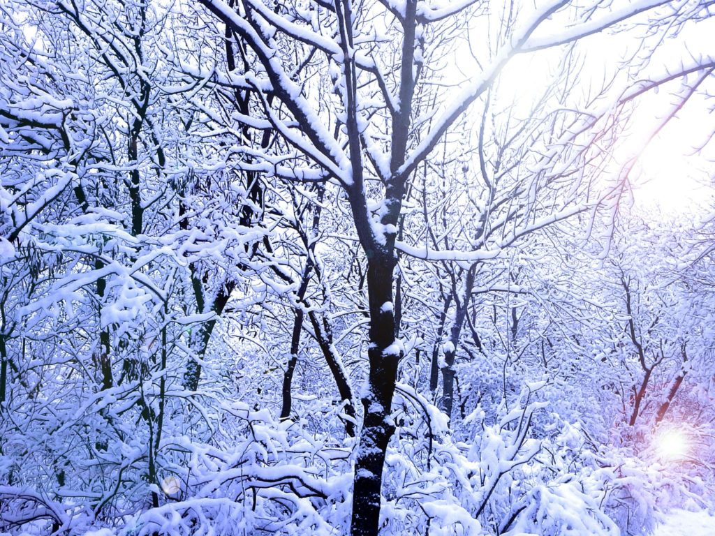 утро снег