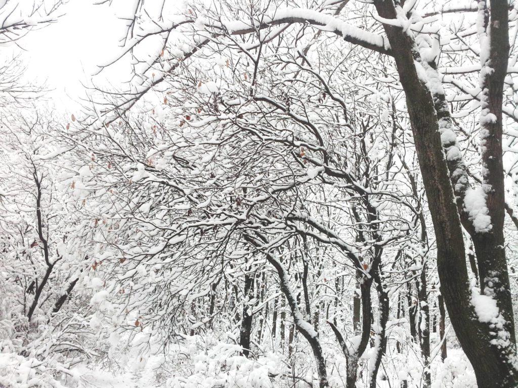тропинка снег