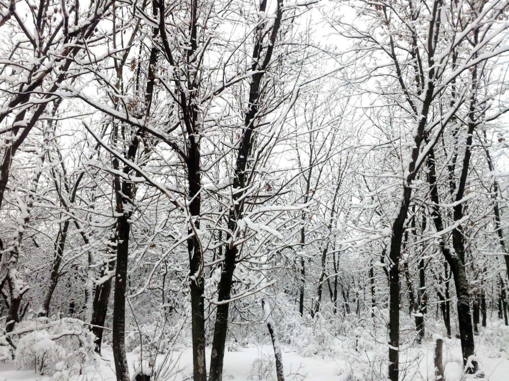 лес мороз