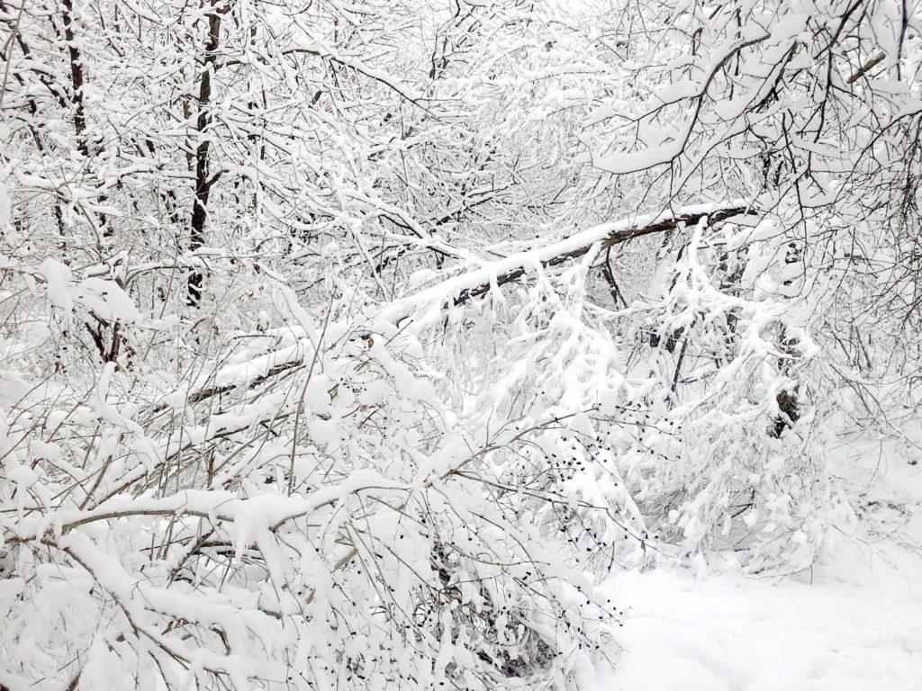 дерево упало от снега