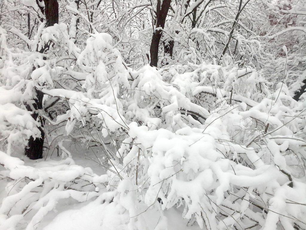 куст зимой