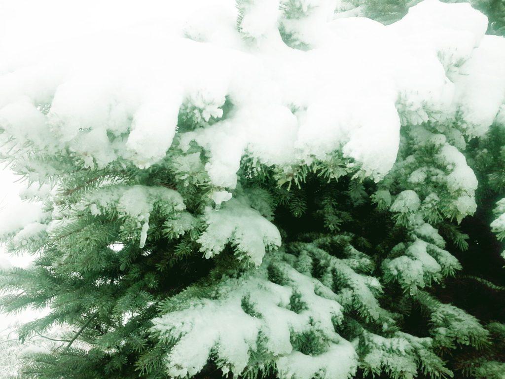 зима ель елка в снегу