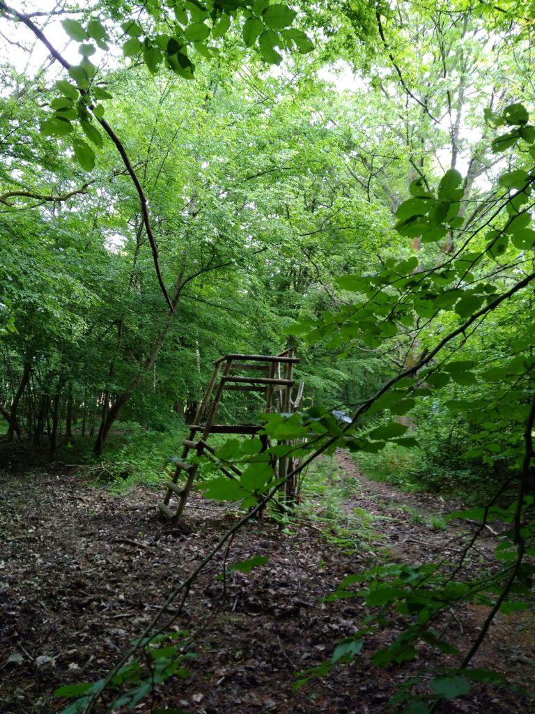 франция леса
