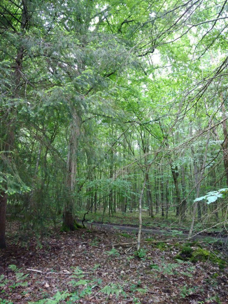 ጫካ лес