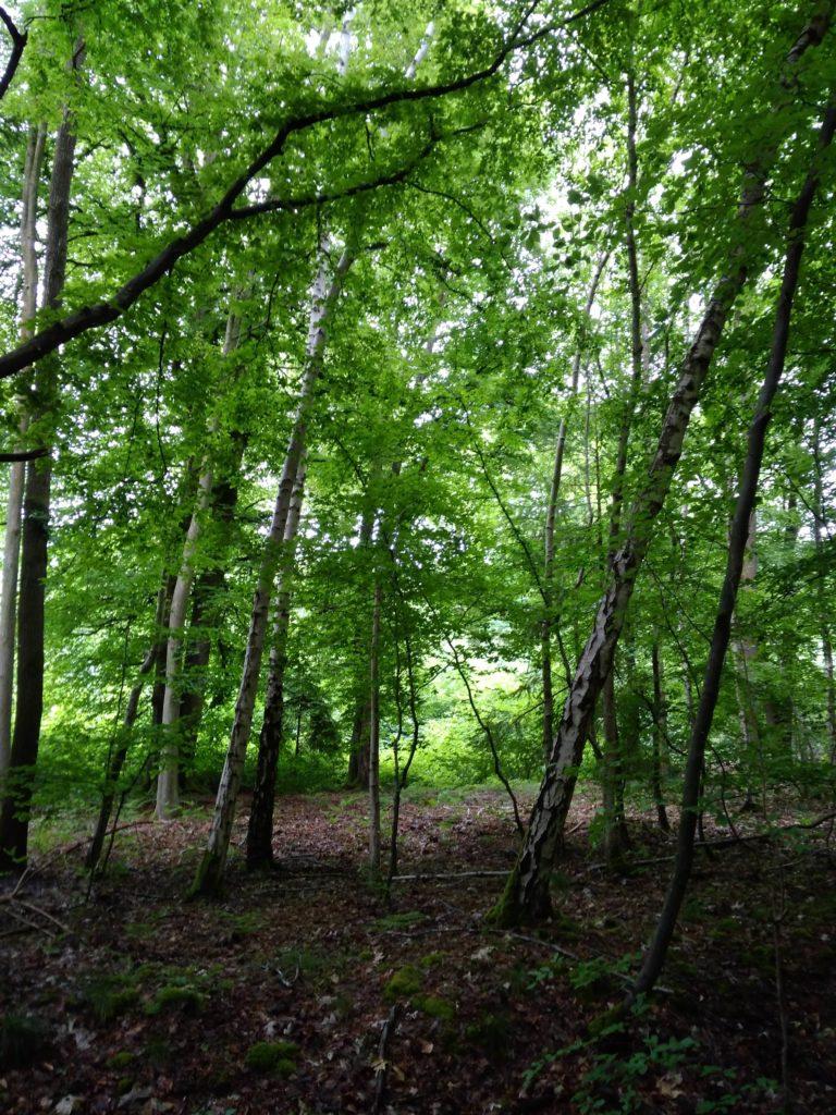 les forêt