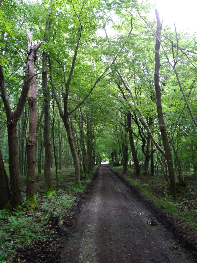 тропа лес
