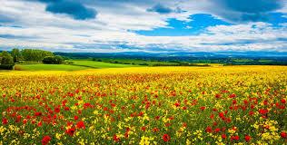 Притча о небе и земле Алексей Каровин